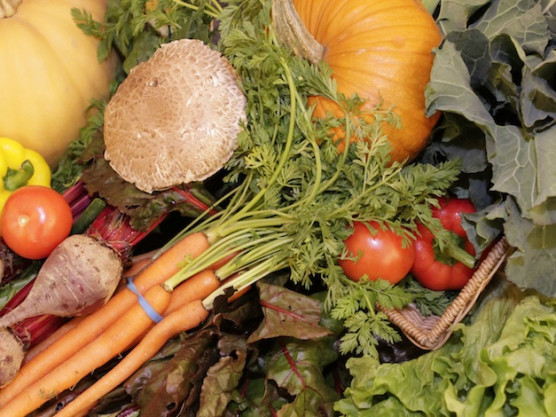 Top Tips for Homegrown Food